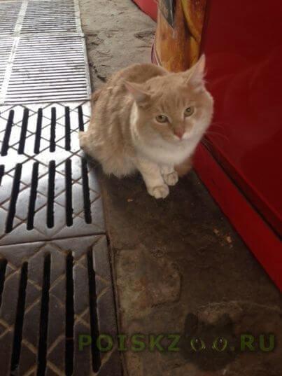 Найдена кошка метро охотный ряд г.Москва