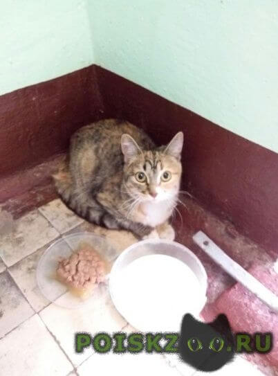 Найдена кошка молодая кошечка, мкр. курьяново г. (ювао) г.Москва