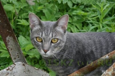 Пропал кот подросток 16.08.2015 г.Ростов-на-Дону