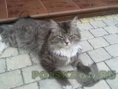 Пропал кот г.Калининград (Кенигсберг)