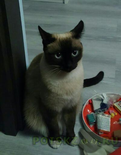 Пропала кошка г.Долгопрудный
