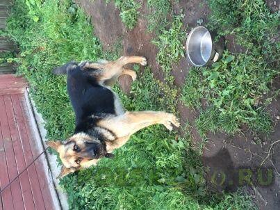 Пропала собака кобель   г.Тверь