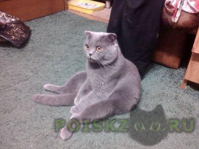 Пропал кот серый вислоухий . район русское поле г.Таганрог