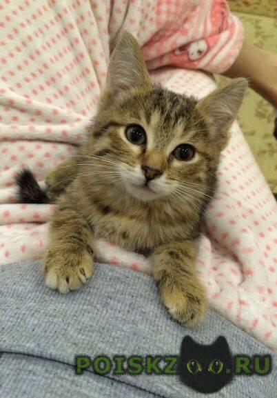 Найдена кошка маленький котенок ищет дом г.Лесной Городок