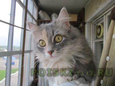 Найдена кошка г.Кирово-Чепецк