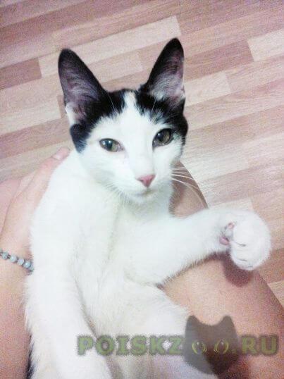 Найдена кошка прекрасная кошечка ищет свой новый дом г.Новосибирск