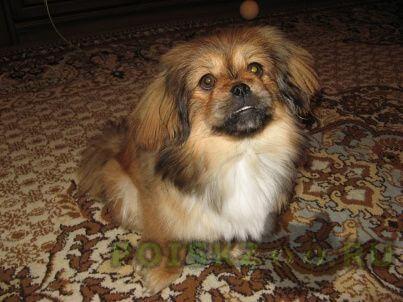Найдена собака г.Пермь