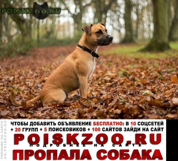 Пропала собака Курган