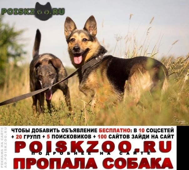 Пропала собака г.Балашиха