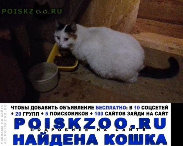 Найдена кошка отдадим в добрые руки г.Сергиев Посад