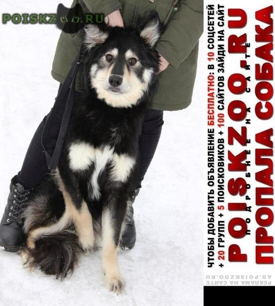 Пропала собака кобель убежал с передержки приютский пес торик г.Балашиха
