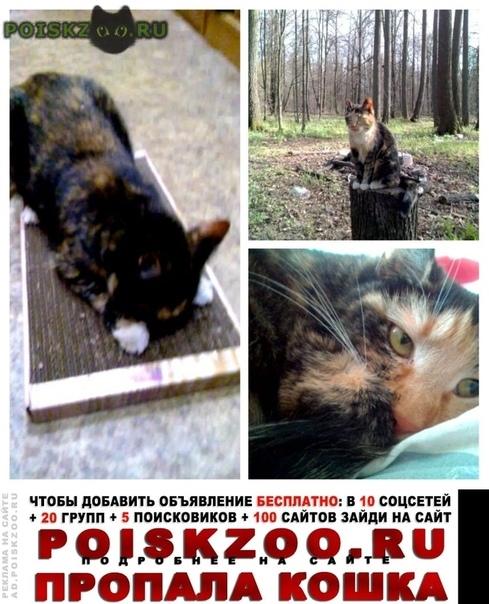 Пропала кошка г.Пермь