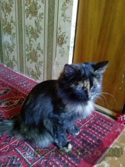 Найдена кошка г.Арамиль