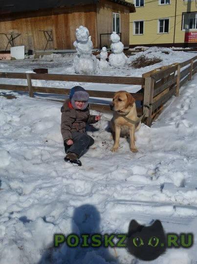 Пропала собака кобель г.Хабаровск