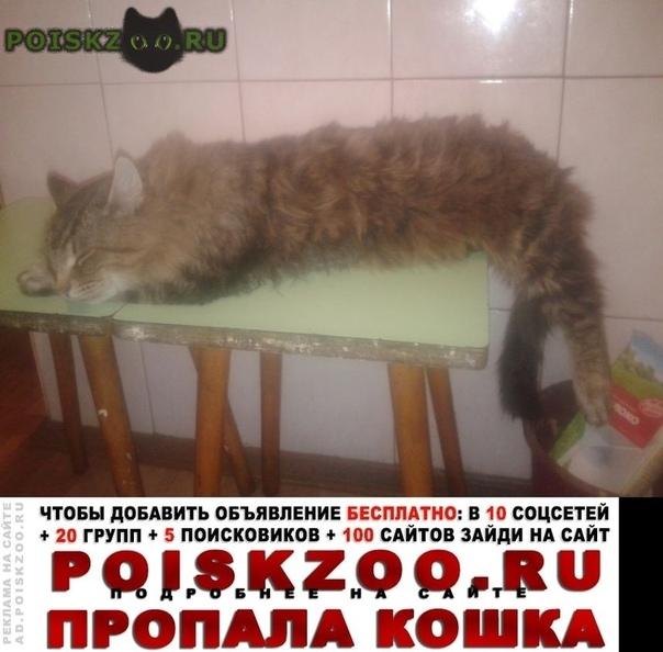 Пропал кот Воскресенск