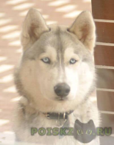 Пропала собака кобель г.Новая Усмань