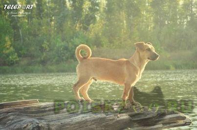 Пропала собака кобель г.Оренбург