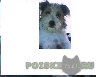 Пропала собака кобель помогите найти собаку г.Череповец