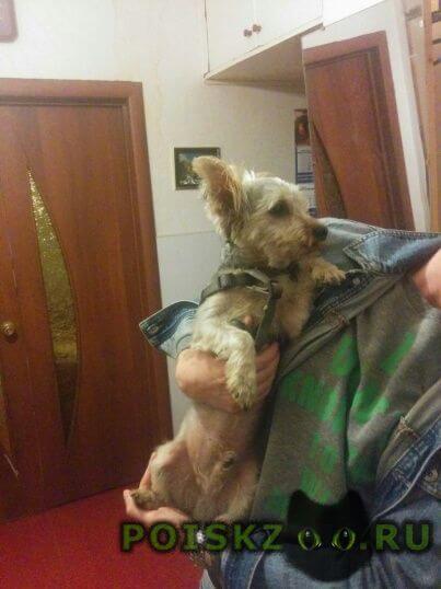Найдена собака кобель нашлась собака, г.видное г.Москва
