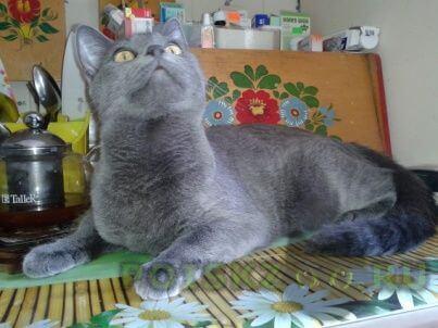 Пропала кошка г.Кировск
