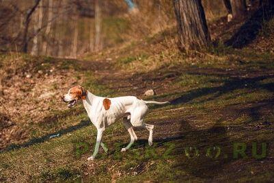 Пропала собака кобель г.Самара