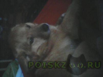 Найдена собака кобель г.Бежецк