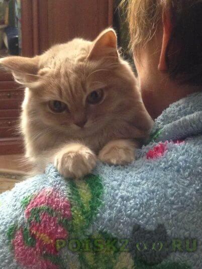 Пропала кошка пушистая рыжая . г.Куровское