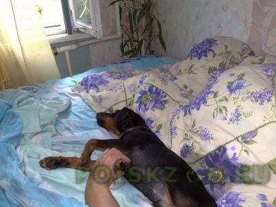 Пропала собака кобель г.Казань