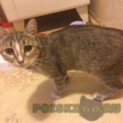 Найдена кошка на м.первомайская г.Москва
