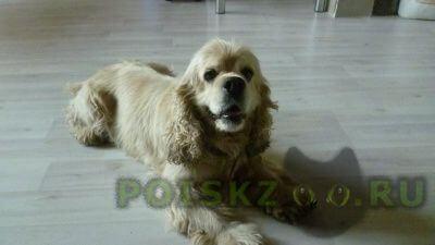 Найдена собака г.Тольятти