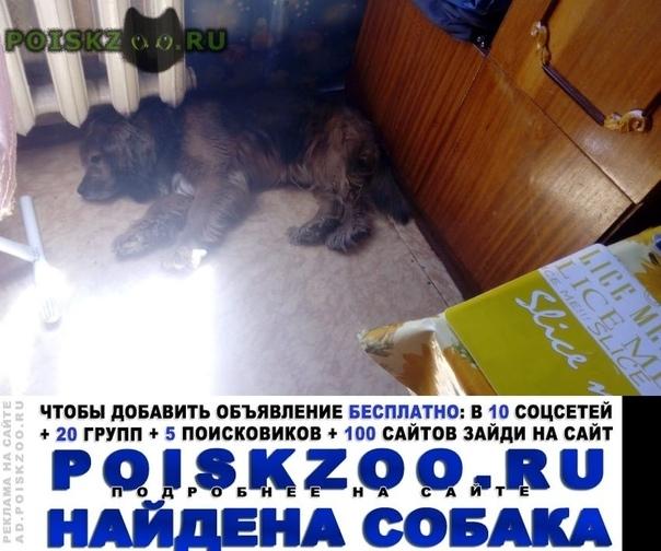 Найдена собака кобель. кокер спаниель г.Можайск