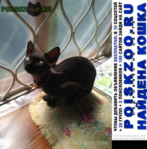 Найден кот сфинкс Бийск