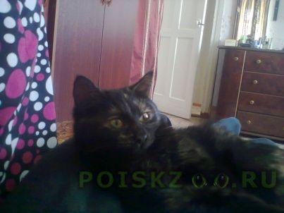 Пропала кошка меня зовут александр г.Волжский (Волгоградская обл.)