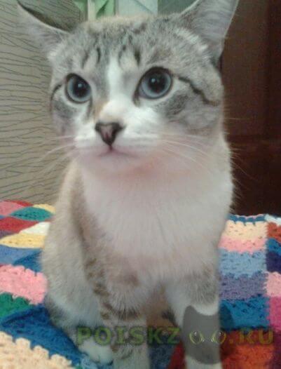 Пропал кот г.Омск