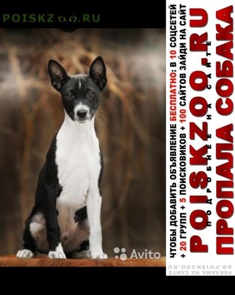 Пропала собака кобель помогите найти щенка г.Москва