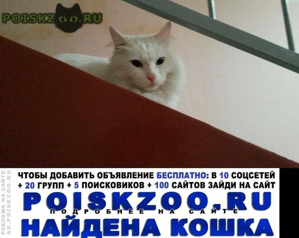 Найден кот белый с разными глазами г.Красноярск