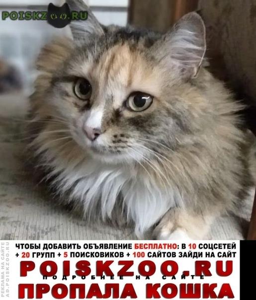 Пропала кошка 28 июня в районе понтонного моста Бийск
