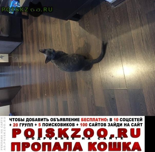 Пропал кот серый кудрявый г.Москва