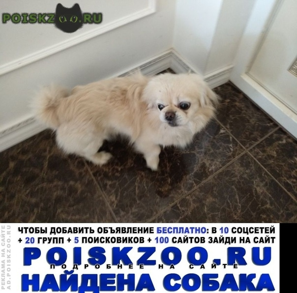 Найдена собака г.Звенигород