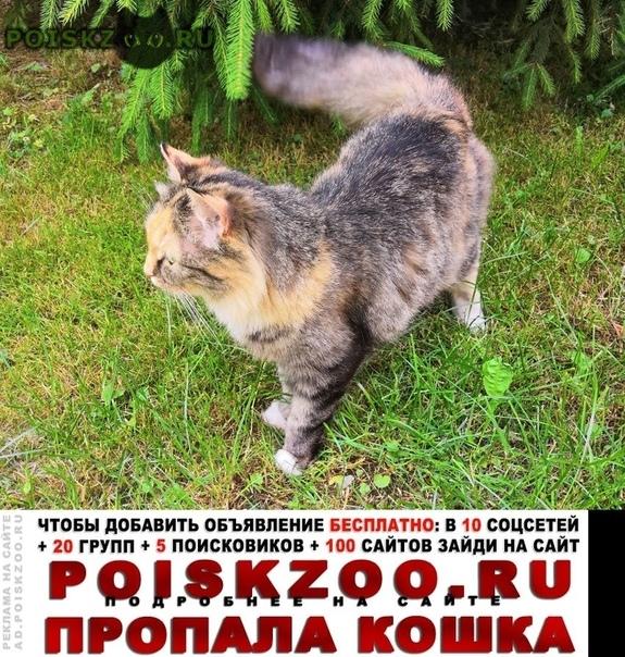 Пропала кошка г.Железнодорожный (Московск.)