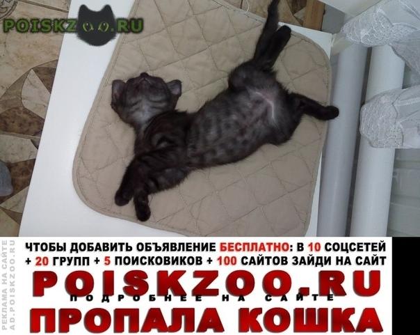 Пропала кошка нуждается в операции г.Динская