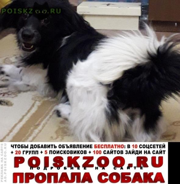 Пропала собака кобель Ростов-на-Дону