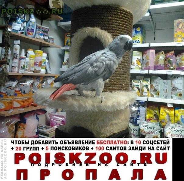 Пропал попугай Красноярск