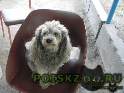 Пропала собака кобель помогите найти г.Саратов