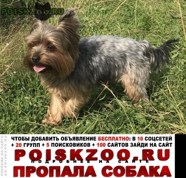 Пропала собака кобель помогите Москва