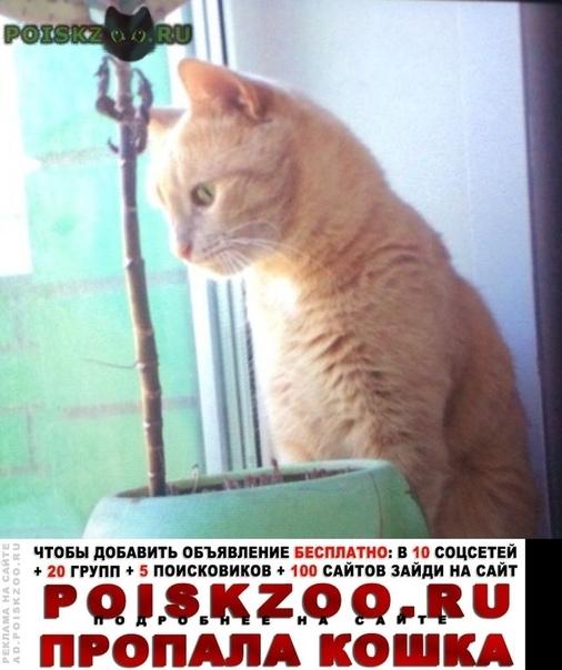 Пропал кот Ижевск