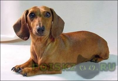 Найдена собака г.Омск