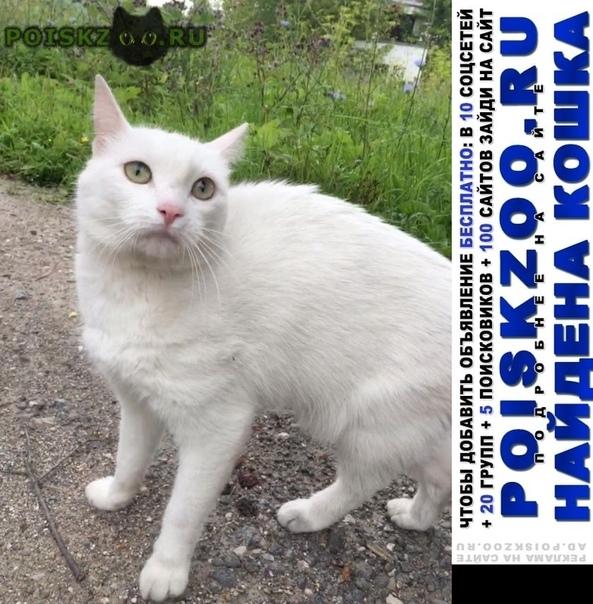 Найдена кошка  микрорайон северное чертаново г.Москва
