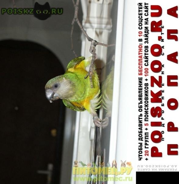 Пропал попугай сенегальский г.Истра