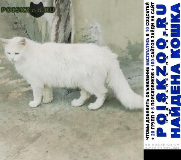 Найдена кошка г.Саранск